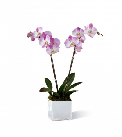 Pink Orchid Planter