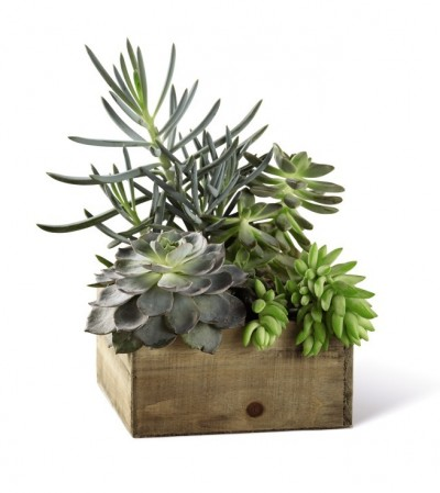 The FTD¨ Southwest Sophisticationª Dishgarden