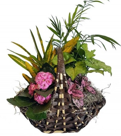 Tropical Planter & Flowering Basket