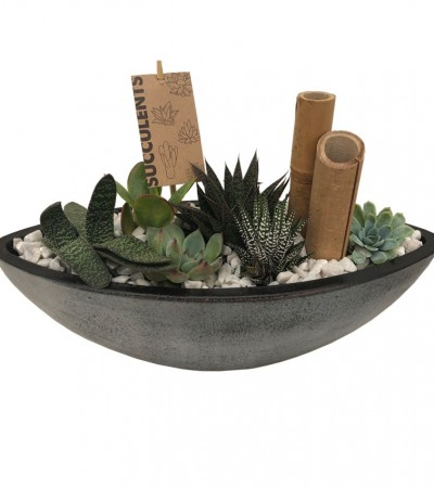 Washed Succulent Boat