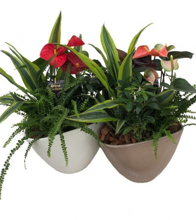 Green & Blooming Tropical Planter