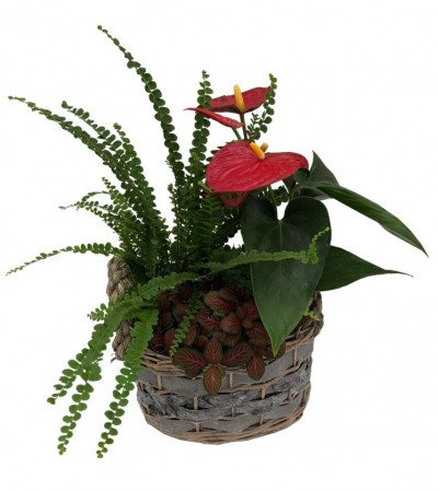 Tropical Planter - Wicker