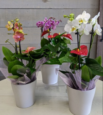 Orchid and Anthurium Planter